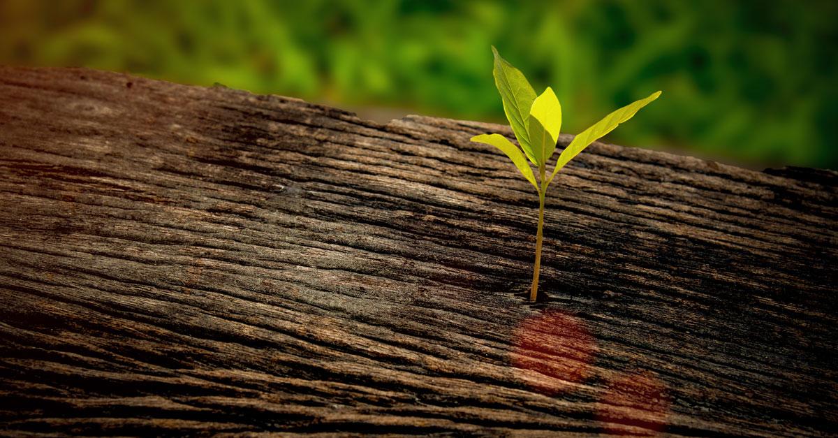 Watering the Seeds of Emerging Leaders