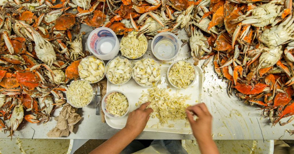 The Maryland crab industry is taking a hit due to Trump administration's visa restrictions and the economic and health concerns due to the coronavirus.  coronavirus trump immigration maryland crab industry
